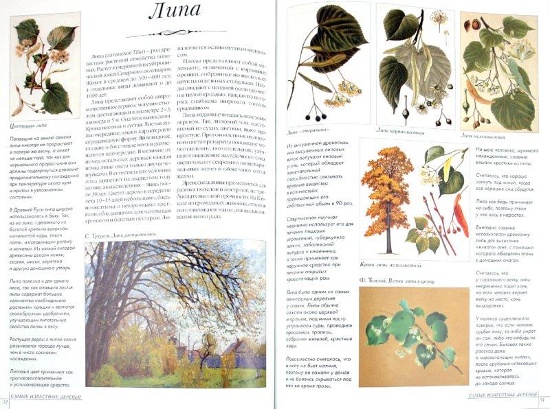 Иллюстрация 1 из 38 для Самые известные деревья. Иллюстрированная энциклопедия   Лабиринт - книги. Источник: Лабиринт