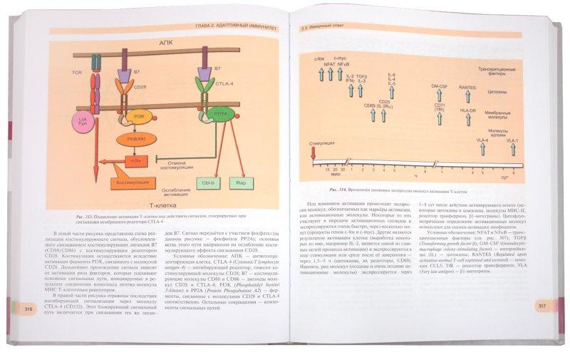 Иллюстрация 1 из 16 для Иммунология. Атлас - Хаитов, Пинегин, Ярилин | Лабиринт - книги. Источник: Лабиринт
