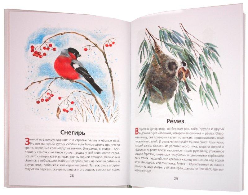 Иллюстрация 1 из 10 для Животные нашей страны (+CD) - Владимир Храбрый | Лабиринт - книги. Источник: Лабиринт