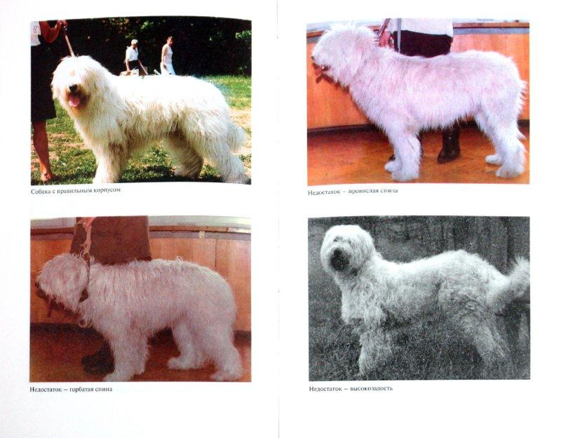 Иллюстрация 1 из 32 для Южнорусская овчарка - Наумова, Виноградова | Лабиринт - книги. Источник: Лабиринт