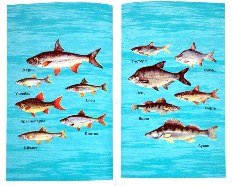 Иллюстрация 1 из 6 для Все о рыбалке - Николай Кузнецов | Лабиринт - книги. Источник: Лабиринт