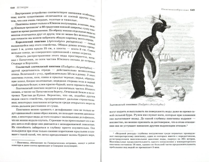 Иллюстрация 1 из 59 для Жизнь животных в одном томе - Альфред Брем | Лабиринт - книги. Источник: Лабиринт