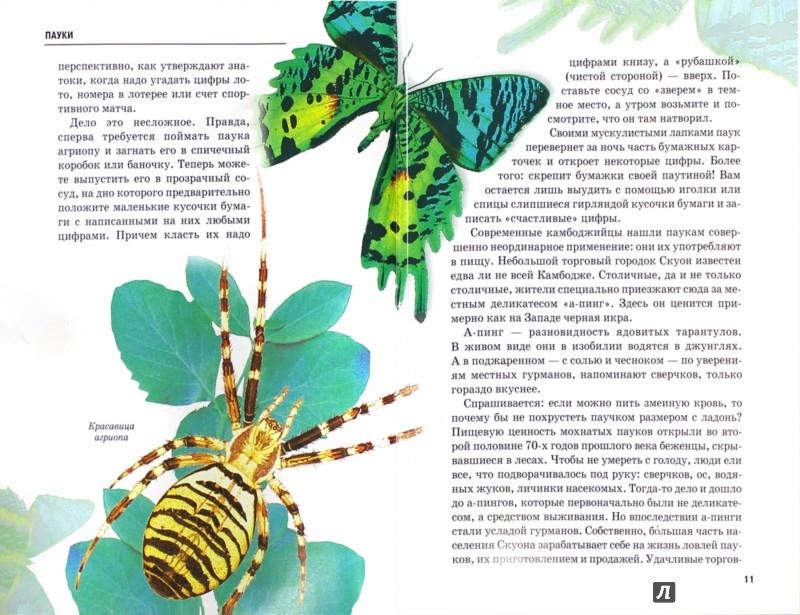 Иллюстрация 1 из 10 для Пауки, клещи. скорпионы - Екатерина Голубева   Лабиринт - книги. Источник: Лабиринт