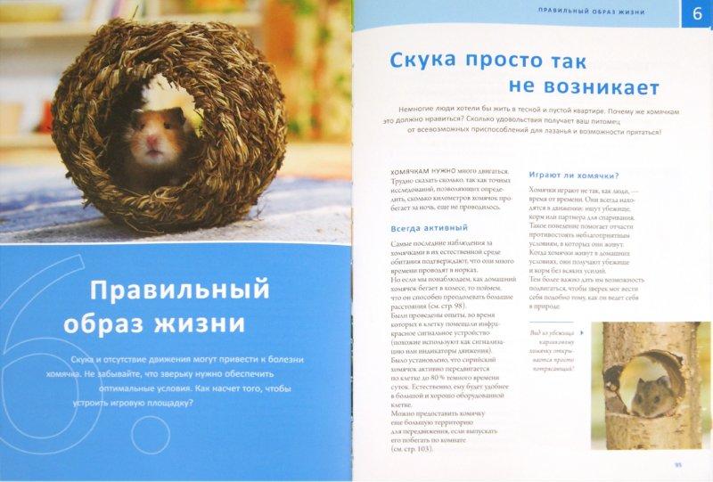 Иллюстрация 1 из 7 для Мой хомячок - Петер Фрицше | Лабиринт - книги. Источник: Лабиринт