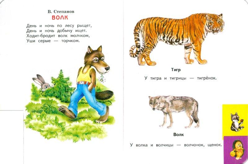 Иллюстрация 1 из 9 для Лесные животные | Лабиринт - книги. Источник: Лабиринт