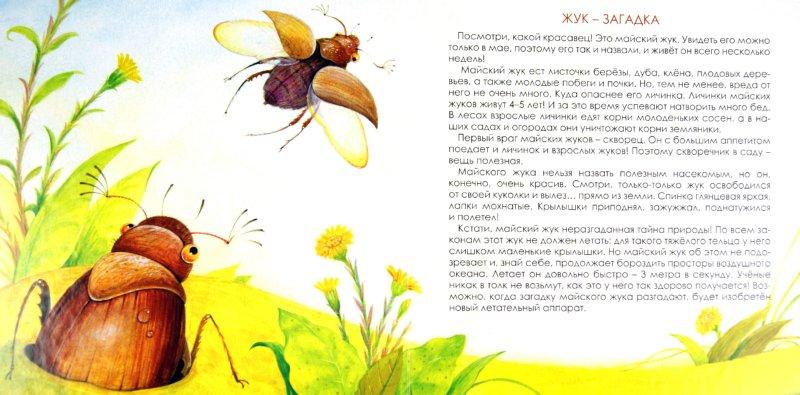 Иллюстрация 1 из 11 для Какие бывают насекомые - Юлия Шенгелая | Лабиринт - книги. Источник: Лабиринт