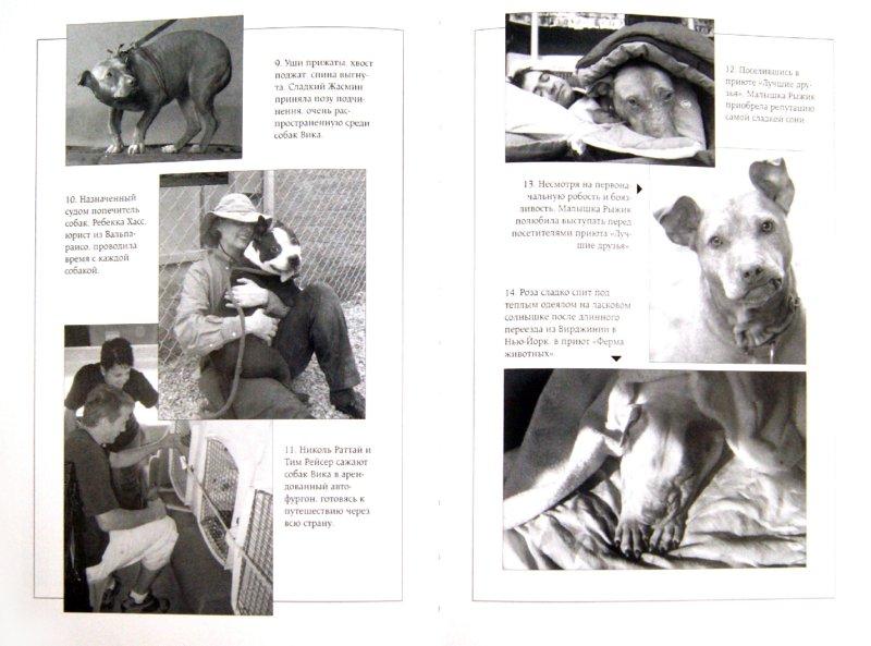 Иллюстрация 1 из 11 для Спасенные - Джим Горант | Лабиринт - книги. Источник: Лабиринт