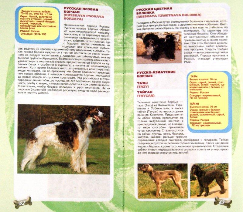 Иллюстрация 1 из 6 для Самые популярные породы собак - Эва-Мария Кремер | Лабиринт - книги. Источник: Лабиринт