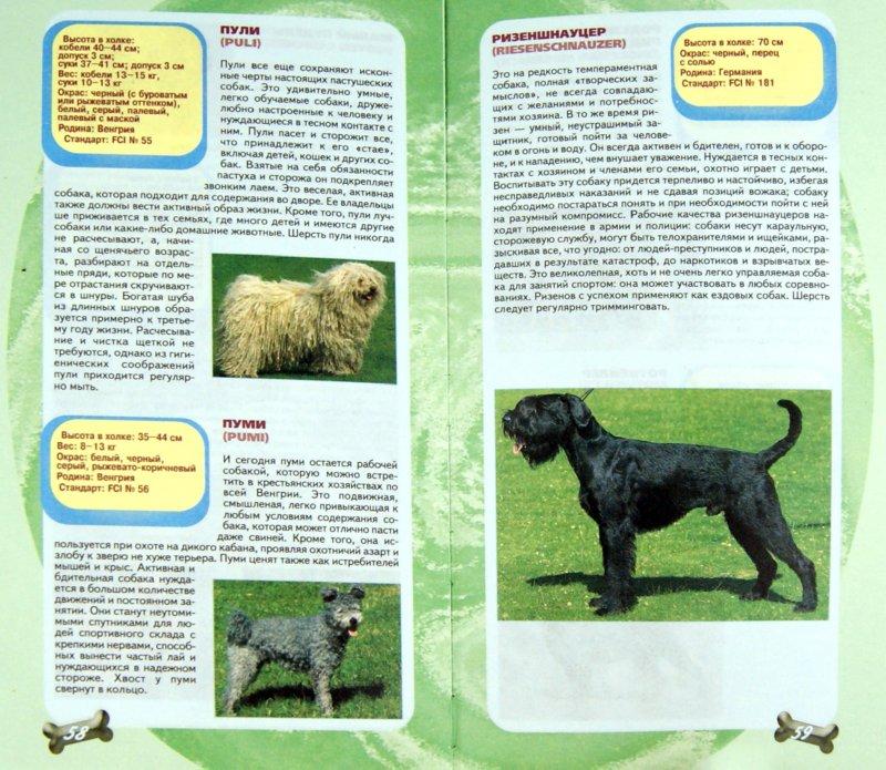 Иллюстрация 1 из 10 для Самые популярные породы собак - Эва-Мария Кремер   Лабиринт - книги. Источник: Лабиринт