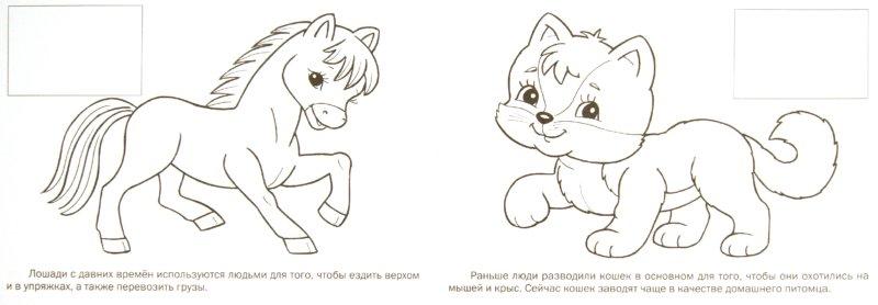 Иллюстрация 1 из 26 для Домашние животные | Лабиринт - книги. Источник: Лабиринт