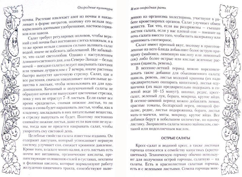 Иллюстрация 1 из 3 для Новые идеи для сада и огорода (+ DVD) - Галина Кизима | Лабиринт - книги. Источник: Лабиринт