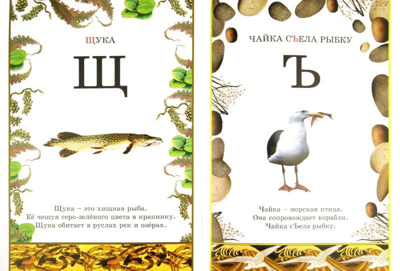 Иллюстрация 1 из 35 для Иллюстрированная азбука животного мира | Лабиринт - книги. Источник: Лабиринт