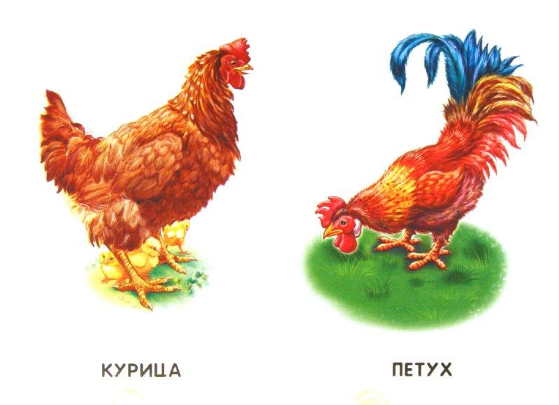 Иллюстрация 1 из 17 для Домашние животные | Лабиринт - книги. Источник: Лабиринт