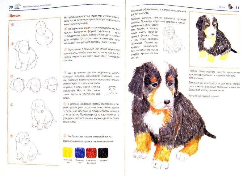 Иллюстрация 1 из 17 для Мои первые уроки рисования. Рисуем зверюшек! - Уте Людвиг-Кайзер | Лабиринт - книги. Источник: Лабиринт