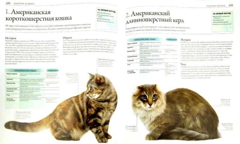Иллюстрация 1 из 14 для Все породы кошек - Дэвид Элдертон | Лабиринт - книги. Источник: Лабиринт