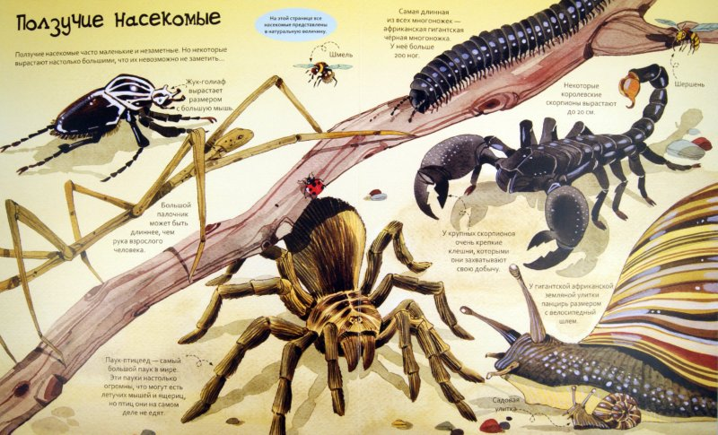 Иллюстрация 1 из 15 для Большая книга о больших животных. Для детей от 4 лет | Лабиринт - книги. Источник: Лабиринт