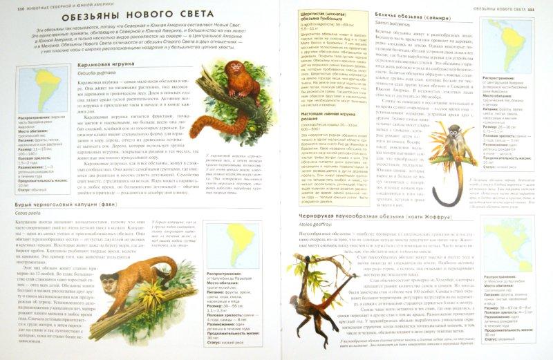 Иллюстрация 1 из 19 для Животные. Визуальная энциклопедия - Том Джексон | Лабиринт - книги. Источник: Лабиринт