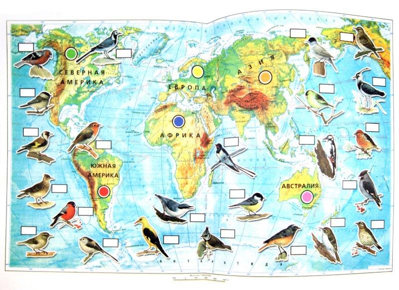 Иллюстрация 1 из 22 для Тематический словарь в картинках. Мир животных. Книга 5. Перелетные и зимующие птицы России - Анна Горьканова | Лабиринт - книги. Источник: Лабиринт