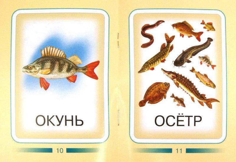 Иллюстрация 1 из 5 для Рыбы | Лабиринт - книги. Источник: Лабиринт