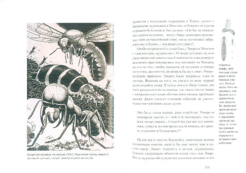 Иллюстрация 1 из 10 для Муравей - Шарлотта Слей | Лабиринт - книги. Источник: Лабиринт