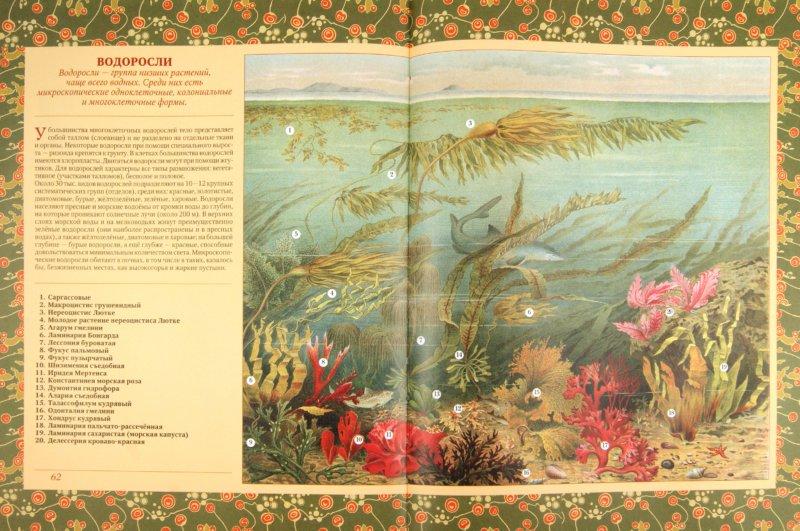 Иллюстрация 1 из 29 для Животные. Растения | Лабиринт - книги. Источник: Лабиринт