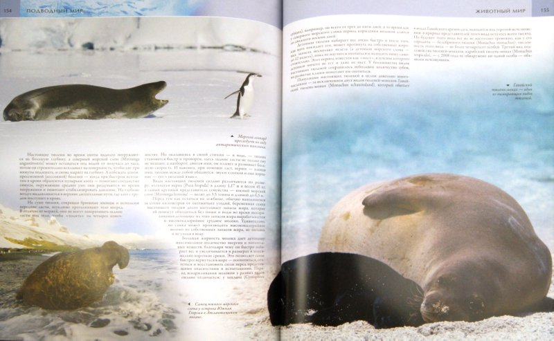 Иллюстрация 1 из 41 для Подводный мир - Фаррингтон, Форти, Хук | Лабиринт - книги. Источник: Лабиринт