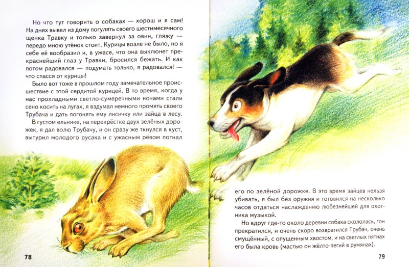 Иллюстрация 1 из 23 для Большая птичья книга | Лабиринт - книги. Источник: Лабиринт