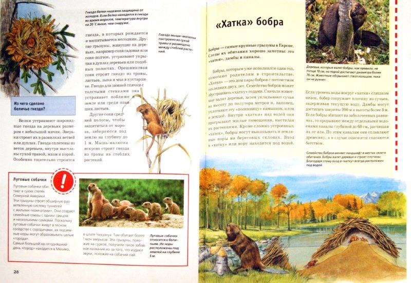 Иллюстрация 1 из 18 для Зачем и почему. Хомяки, бобры и другие грызуны - Сабина Штегхаус-Ковач | Лабиринт - книги. Источник: Лабиринт
