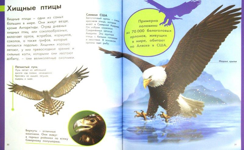 Иллюстрация 1 из 12 для Животные. Моя первая энциклопедия - Райан, Куп, Флинт | Лабиринт - книги. Источник: Лабиринт