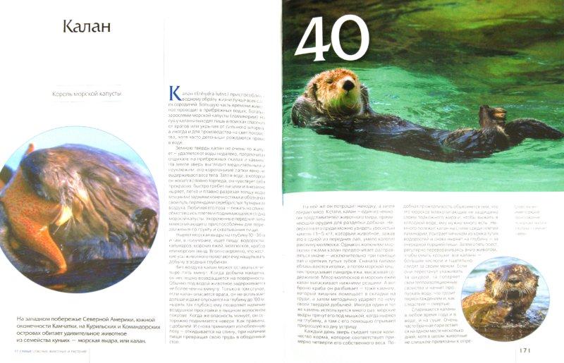 Иллюстрация 1 из 52 для 77 самых опасных животных и растений | Лабиринт - книги. Источник: Лабиринт