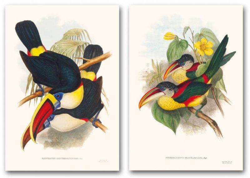 Иллюстрация 1 из 2 для Family of Toucans - John Gould | Лабиринт - книги. Источник: Лабиринт