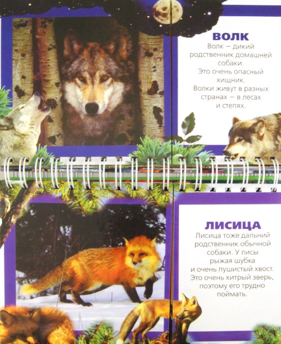 Иллюстрация 1 из 2 для Дикие животные | Лабиринт - книги. Источник: Лабиринт