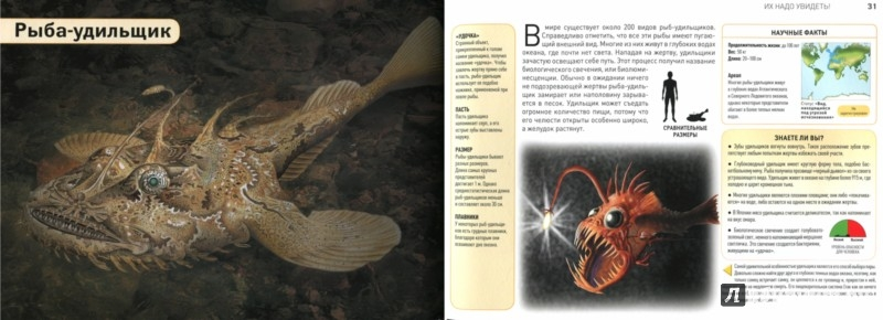 Иллюстрация 1 из 29 для Монстры  в ночи - Лиза Реган | Лабиринт - книги. Источник: Лабиринт