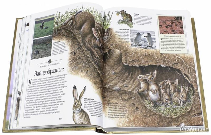 Иллюстрация 1 из 49 для Детская энциклопедия | Лабиринт - книги. Источник: Лабиринт