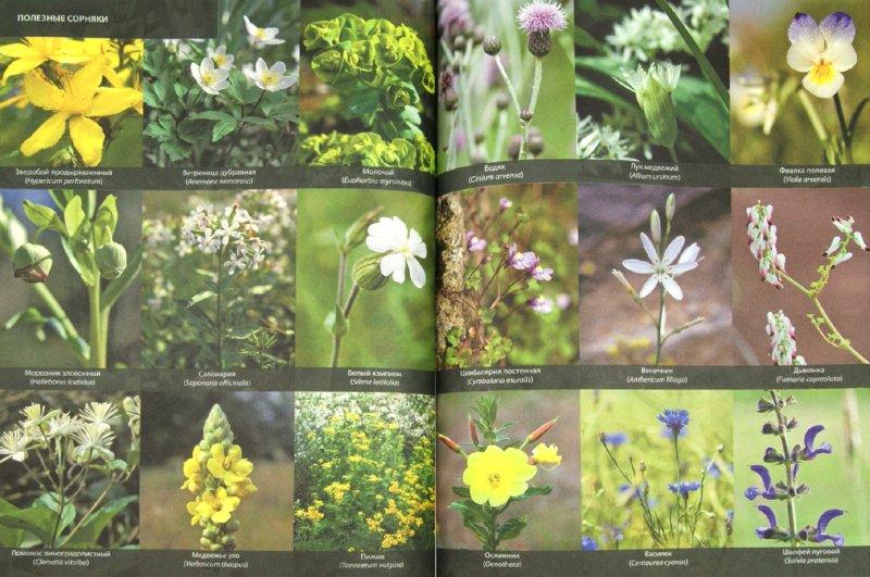 Иллюстрация 1 из 9 для Щедрый сад и огород. Экологически чистые фрукты и овощи | Лабиринт - книги. Источник: Лабиринт