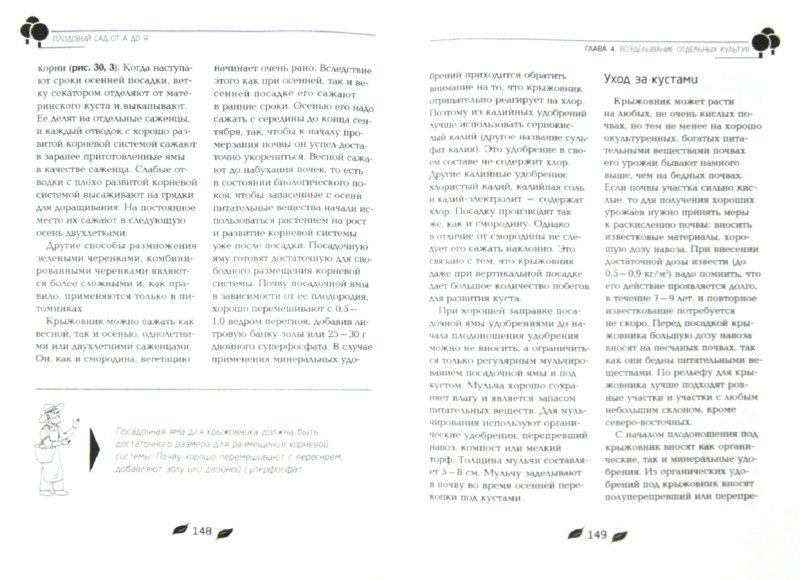 Иллюстрация 1 из 8 для Плодовый сад от А до Я - Франс Халилов | Лабиринт - книги. Источник: Лабиринт