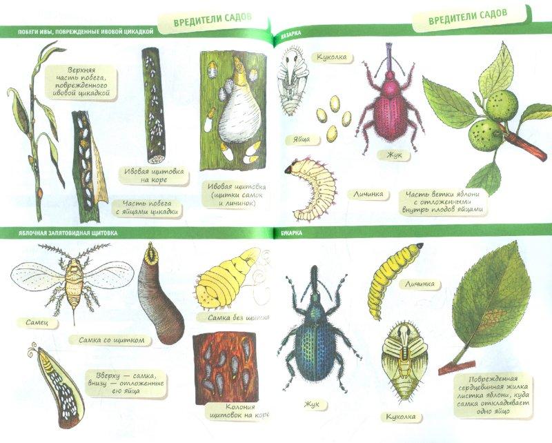 Иллюстрация 1 из 9 для Сад и огород круглый год - Евгения Валягина-Малютина   Лабиринт - книги. Источник: Лабиринт