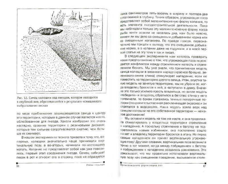 Иллюстрация 1 из 34 для Мир серебристой чайки - Нико Тинберген   Лабиринт - книги. Источник: Лабиринт