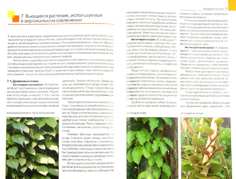 Иллюстрация 1 из 16 для Вертикальное озеленение. Дизайнерские решения. Выбор растений - Андрей Лысиков | Лабиринт - книги. Источник: Лабиринт