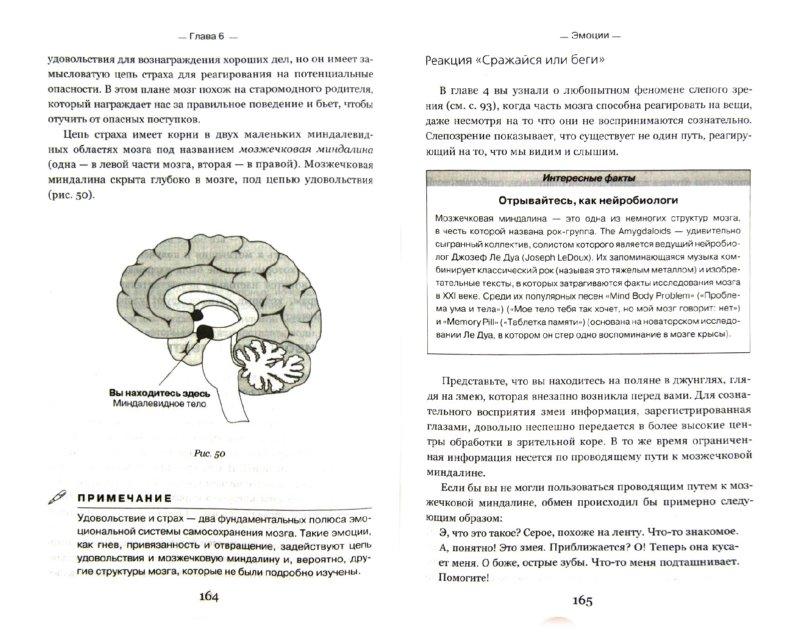 Иллюстрация 1 из 7 для Научи свой мозг работать - Мэтью Макдональд | Лабиринт - книги. Источник: Лабиринт