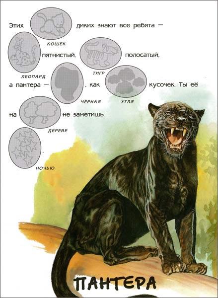 Иллюстрация 1 из 10 для В зоопарке. Мир животных | Лабиринт - книги. Источник: Лабиринт