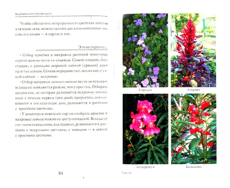 Иллюстрация 1 из 5 для Выращиваем однолетние цветы - Любовь Мовсесян   Лабиринт - книги. Источник: Лабиринт