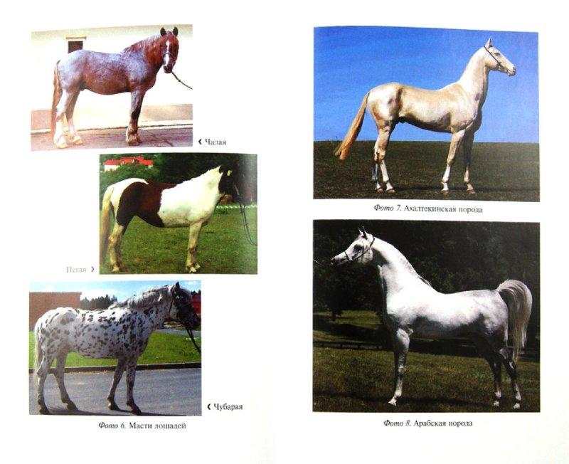 Иллюстрация 1 из 16 для Лошадь в фермерском хозяйстве - Мирось, Ткачева | Лабиринт - книги. Источник: Лабиринт