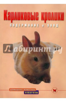 Карликовые кролики. Содержание и уход от Лабиринт