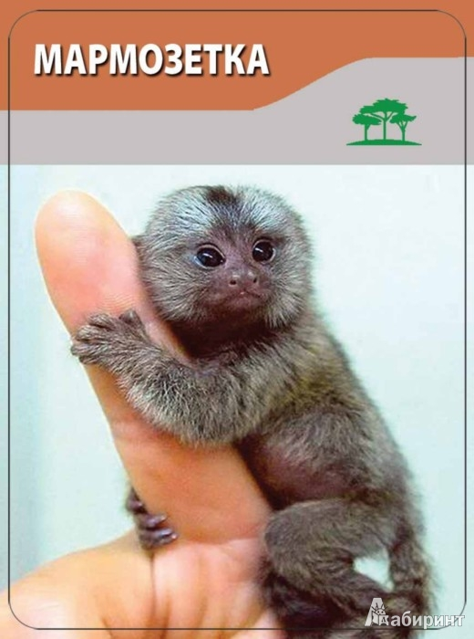 Иллюстрация 1 из 13 для Детям о животных. 3-12 лет - Н. Шишова | Лабиринт - книги. Источник: Лабиринт