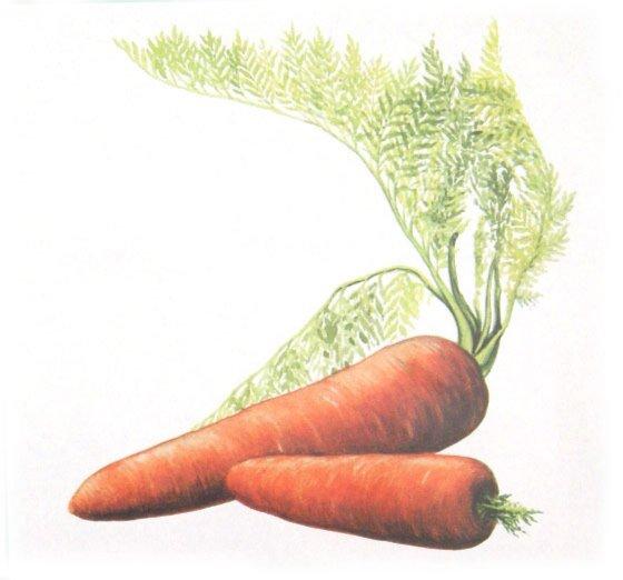 Иллюстрация 1 из 7 для Овощи Карточки | Лабиринт - книги. Источник: Лабиринт