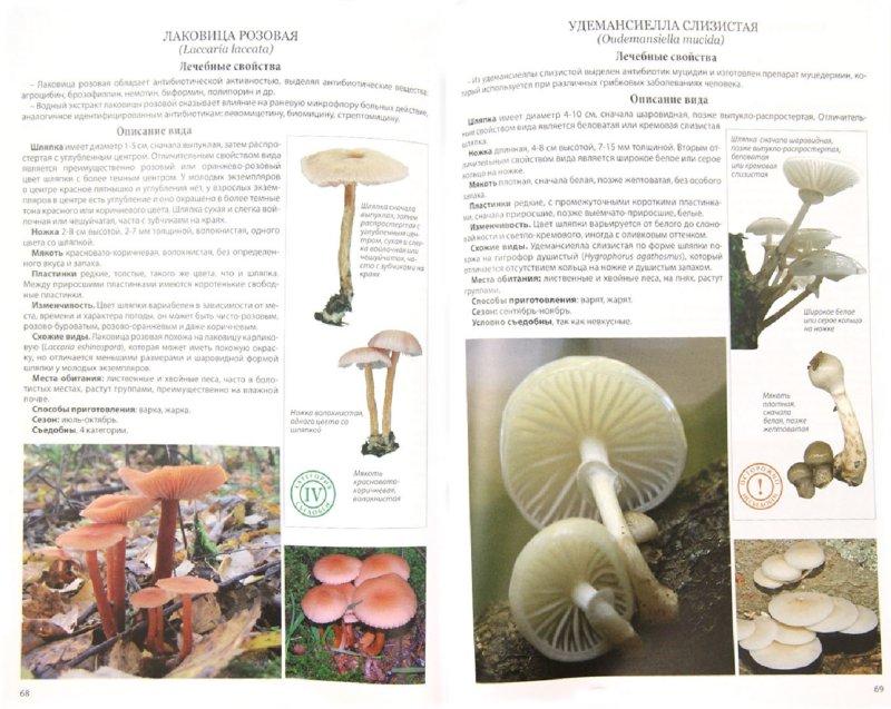Иллюстрация 1 из 11 для Все о лечебных свойствах грибов - Матанцев, Матанцева   Лабиринт - книги. Источник: Лабиринт