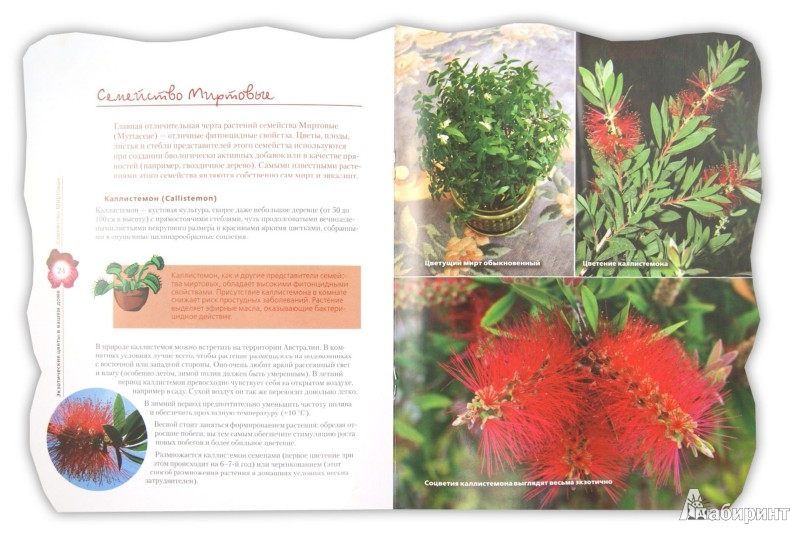 Иллюстрация 1 из 2 для Экзотические цветы в вашем доме - Наталья Власова | Лабиринт - книги. Источник: Лабиринт
