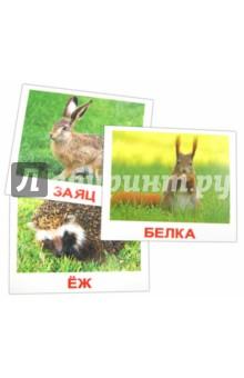 Купить Комплект карточек Дикие животные (16, 5х19, 5 см), Вундеркинд с пелёнок, Обучающие игры