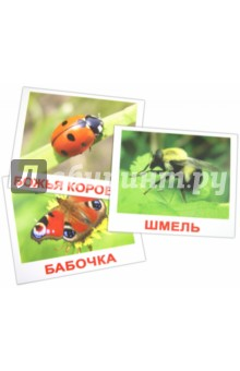 """Комплект карточек """"Насекомые"""" (16,5х19,5 см)"""